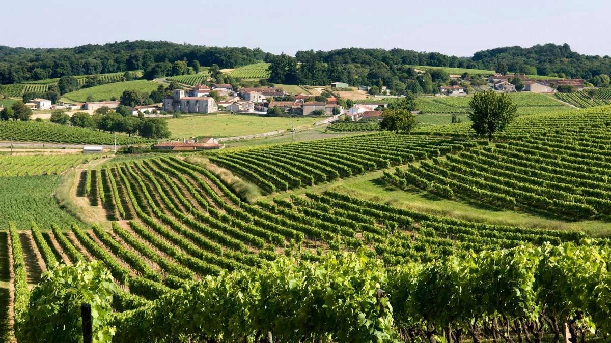 Cognac raptors: winegrowers take advantage of legal loophole to win vineyards